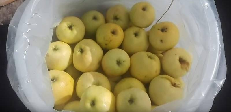 Чем и кому полезны моченые яблоки