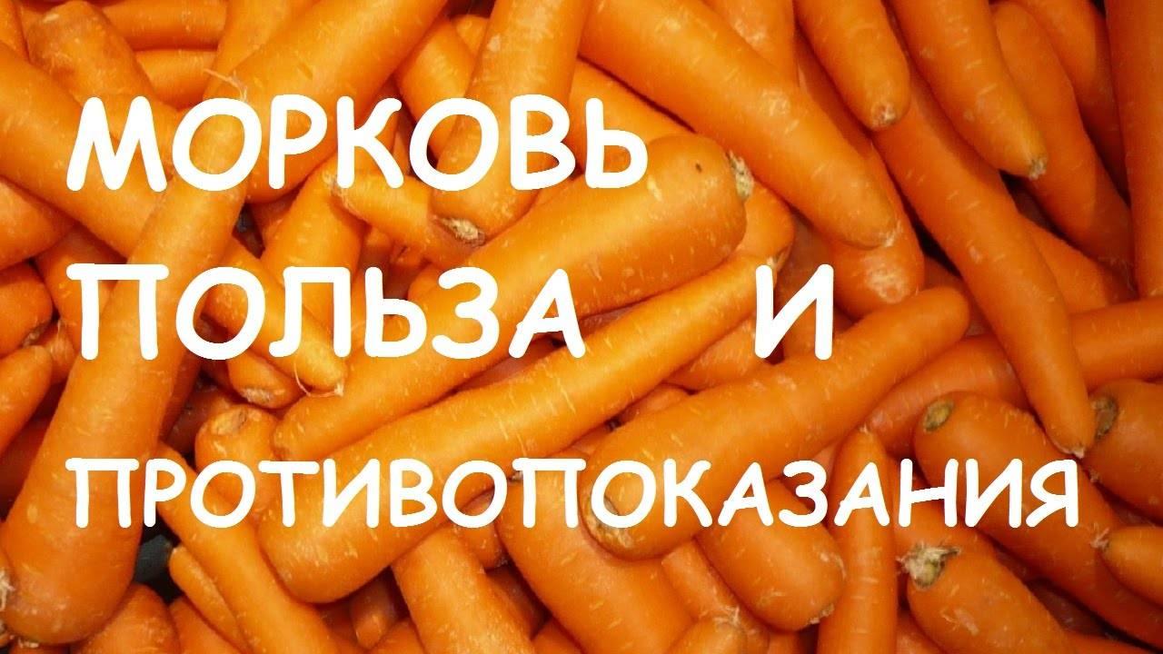 Морковь: польза и вред для человеческого организма