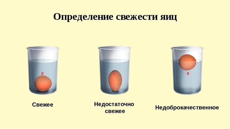 Как можно проверить свежесть куриных и перепелиных яиц?