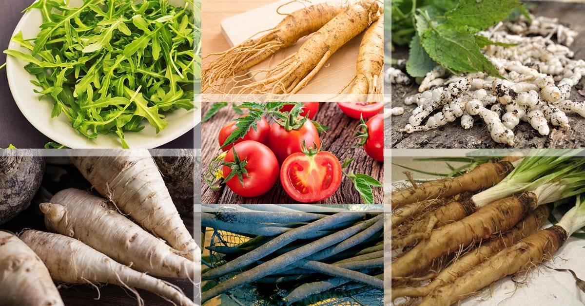 Пастернак овощ — польза и вред для здоровья человека