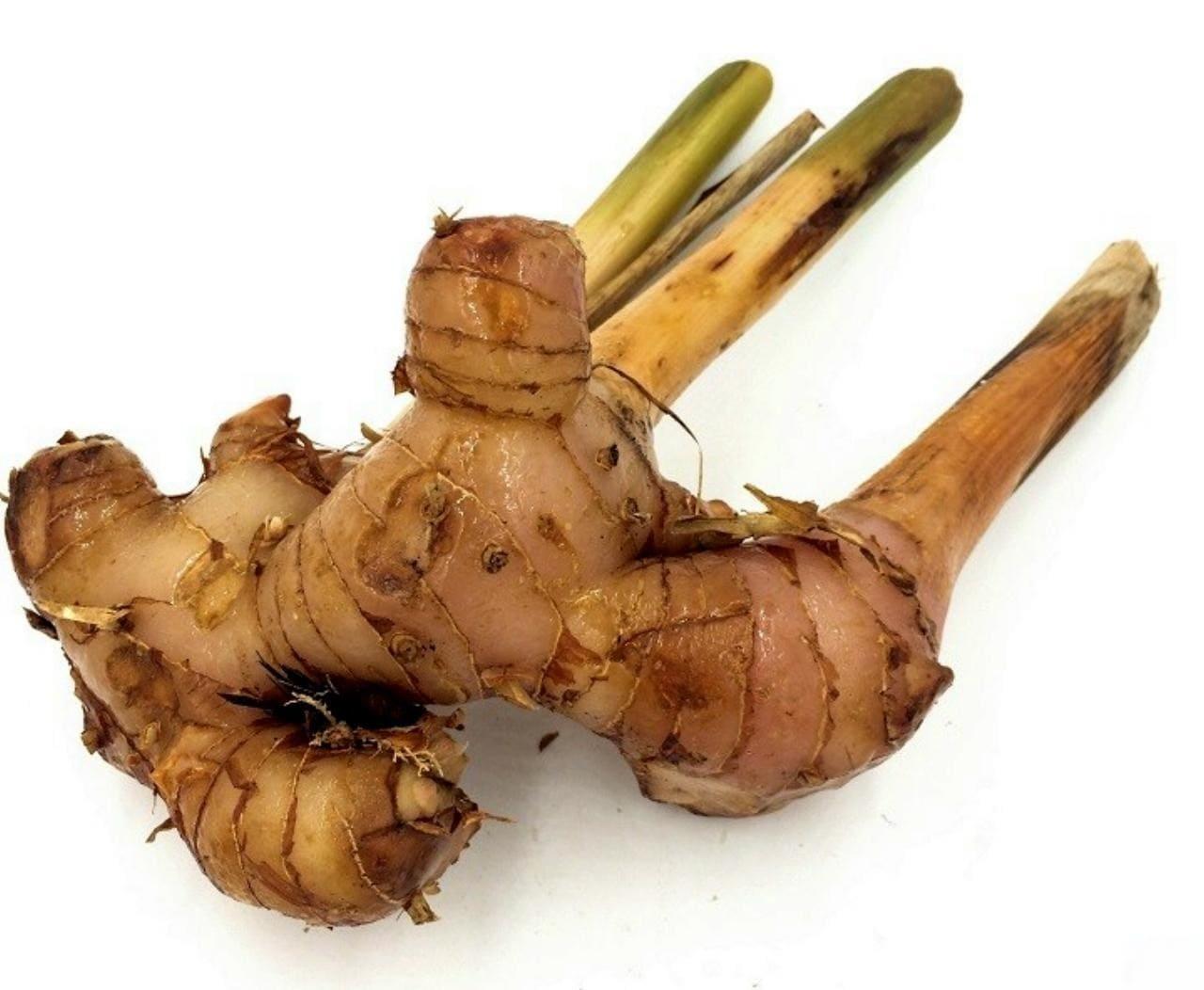 Калган корень лечебные свойства применение настойка для мужчин