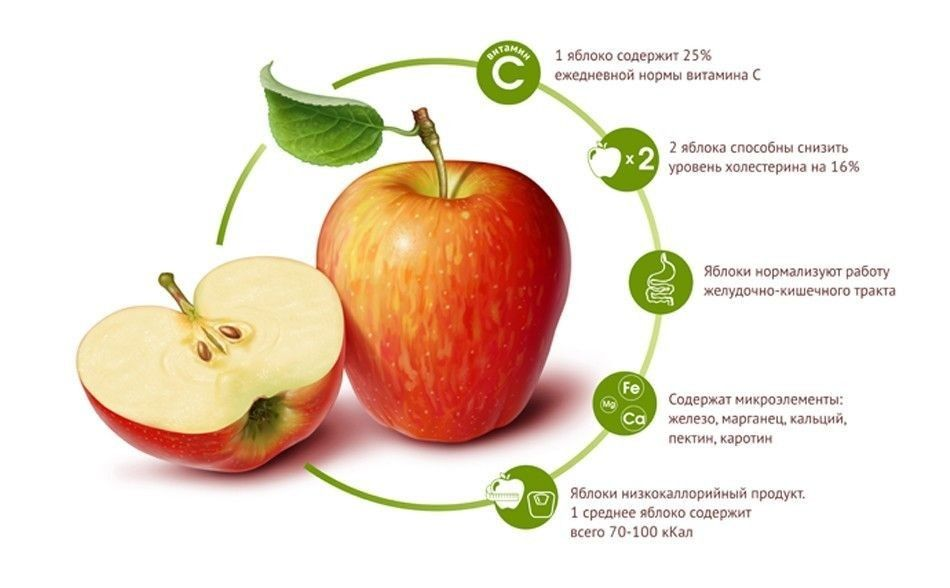 Яблоки (свежие, печеные, моченые, сушеные) — польза и вред для организма