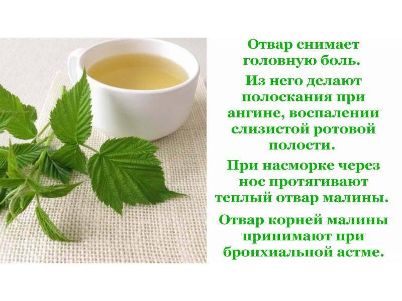 Полезные свойства листьев малины и противопоказания