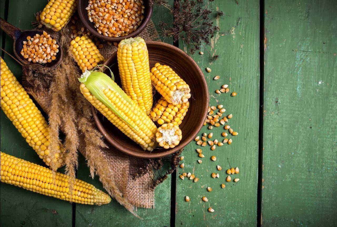 Кукуруза — полезные свойства овоща и какую опасность она может в себе нести?