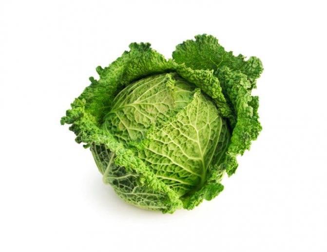 Савойская капуста – как такой полезный овощ не стал популярным у наших предков?