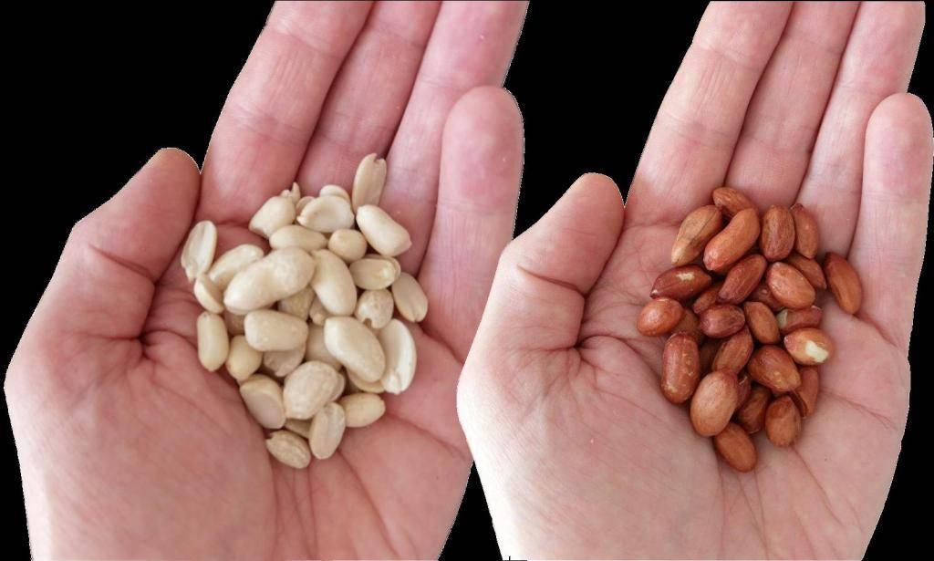 Польза и вред арахиса при беременности