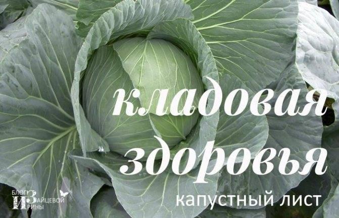 Лечение капустой народные рецепты