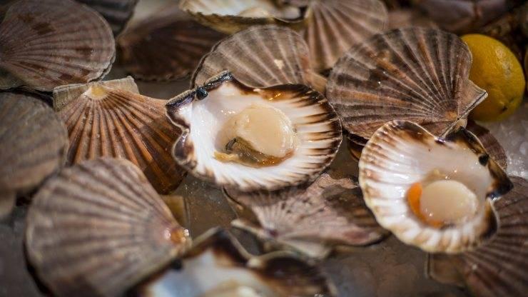 Морские гребешки: чем полезны и чем вредны