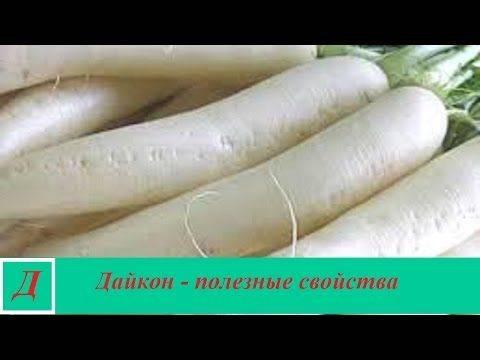 Дайкон – что это такое, полезные свойства и вред для организма человека