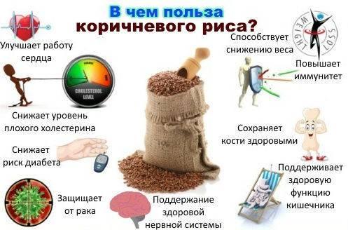 Бурый рис (коричневый): польза и вред для организма, как использовать его в качестве средства для похудения и другие аспекты