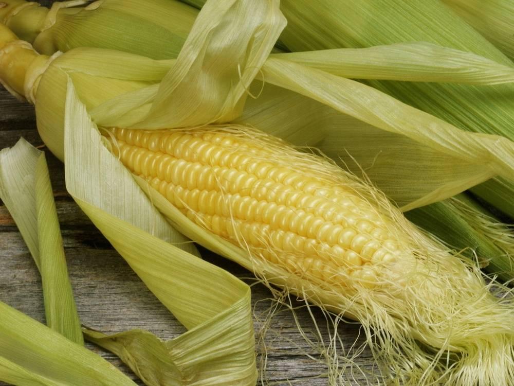 Чем так полезны кукурузные рыльца