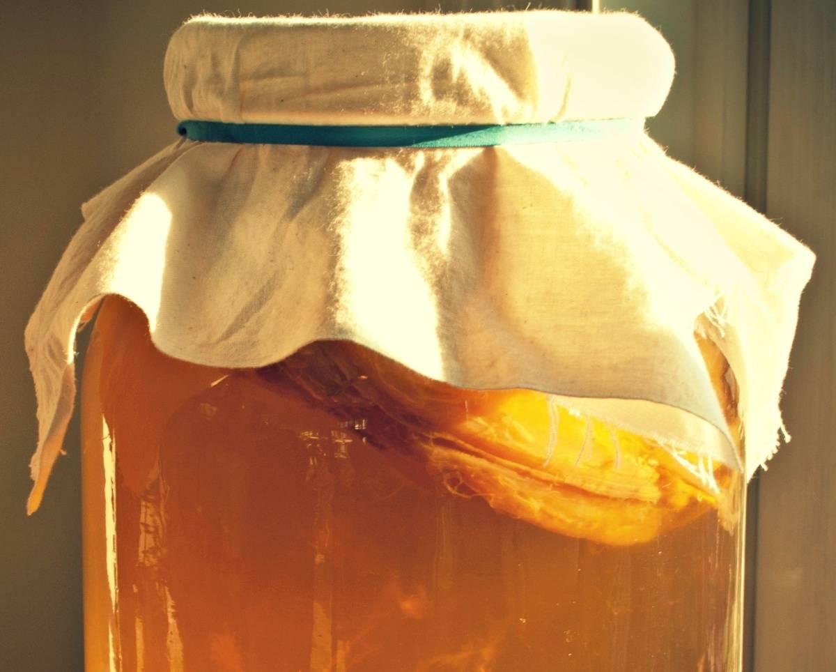 Чайный гриб: польза и вред, выращивание