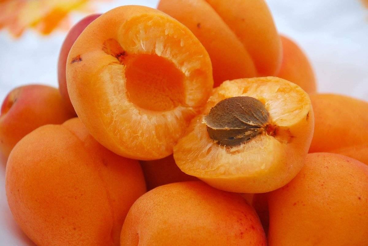 Польза абрикосов для здоровья человека, состав и калорийность