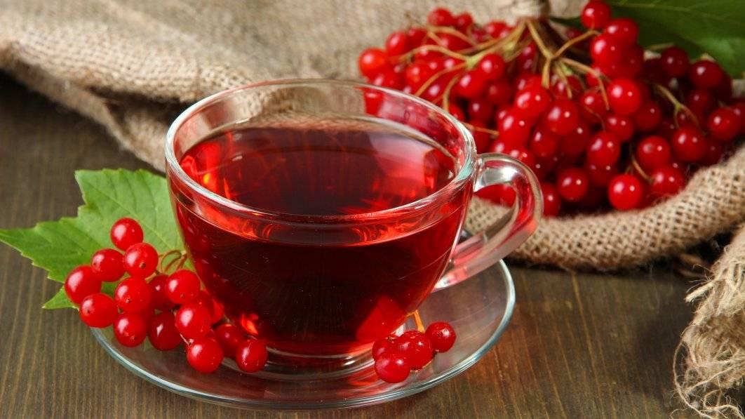 Красная рябина: польза и вред, лечебные свойства, что приготовить