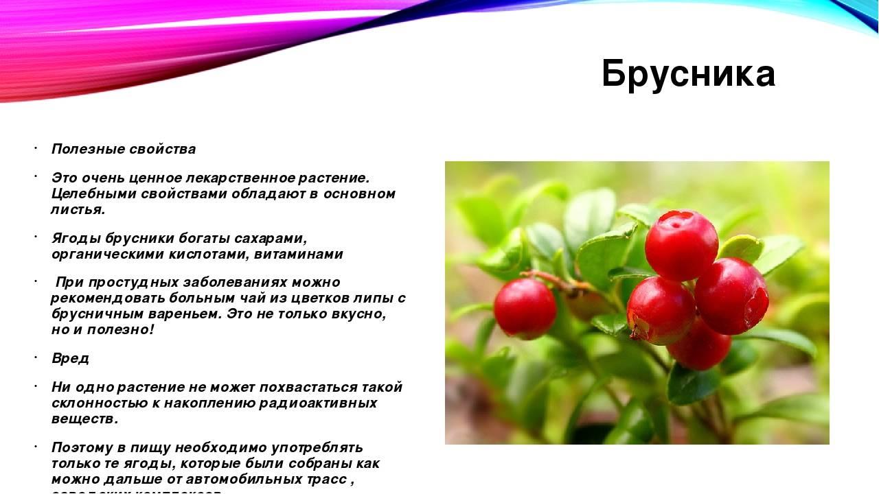 Описание, полезные свойства и противопоказания ягоды костяники