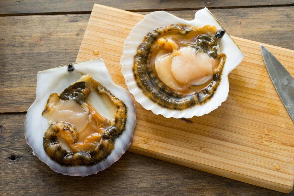 Моллюск морской гребешок, польза и вред