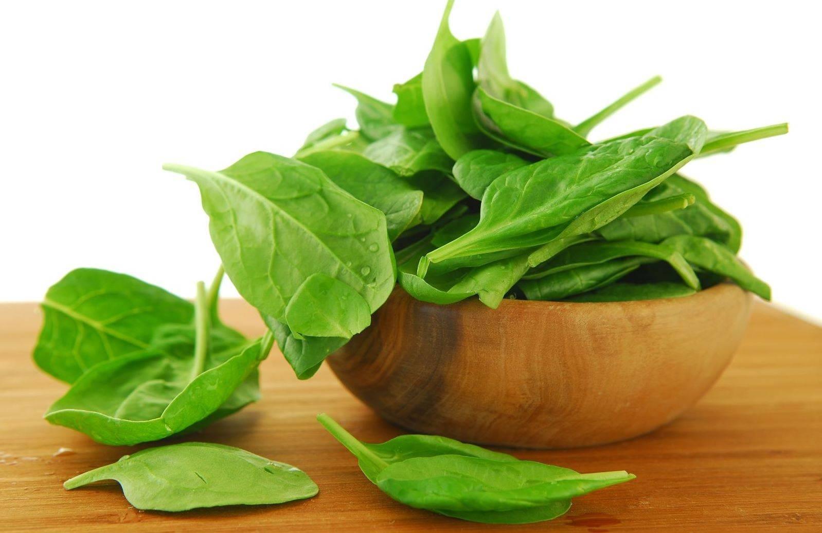 Щавель – польза и вред молодого растения