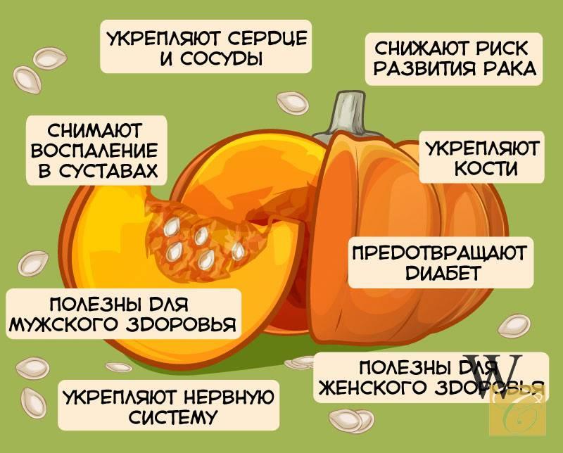 Сырая тыква польза и вред для здоровья