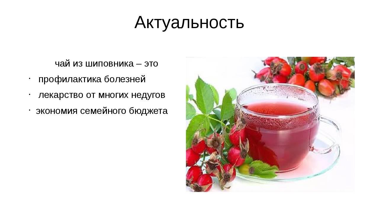 Лечебные свойства шиповника, применение и противопоказания