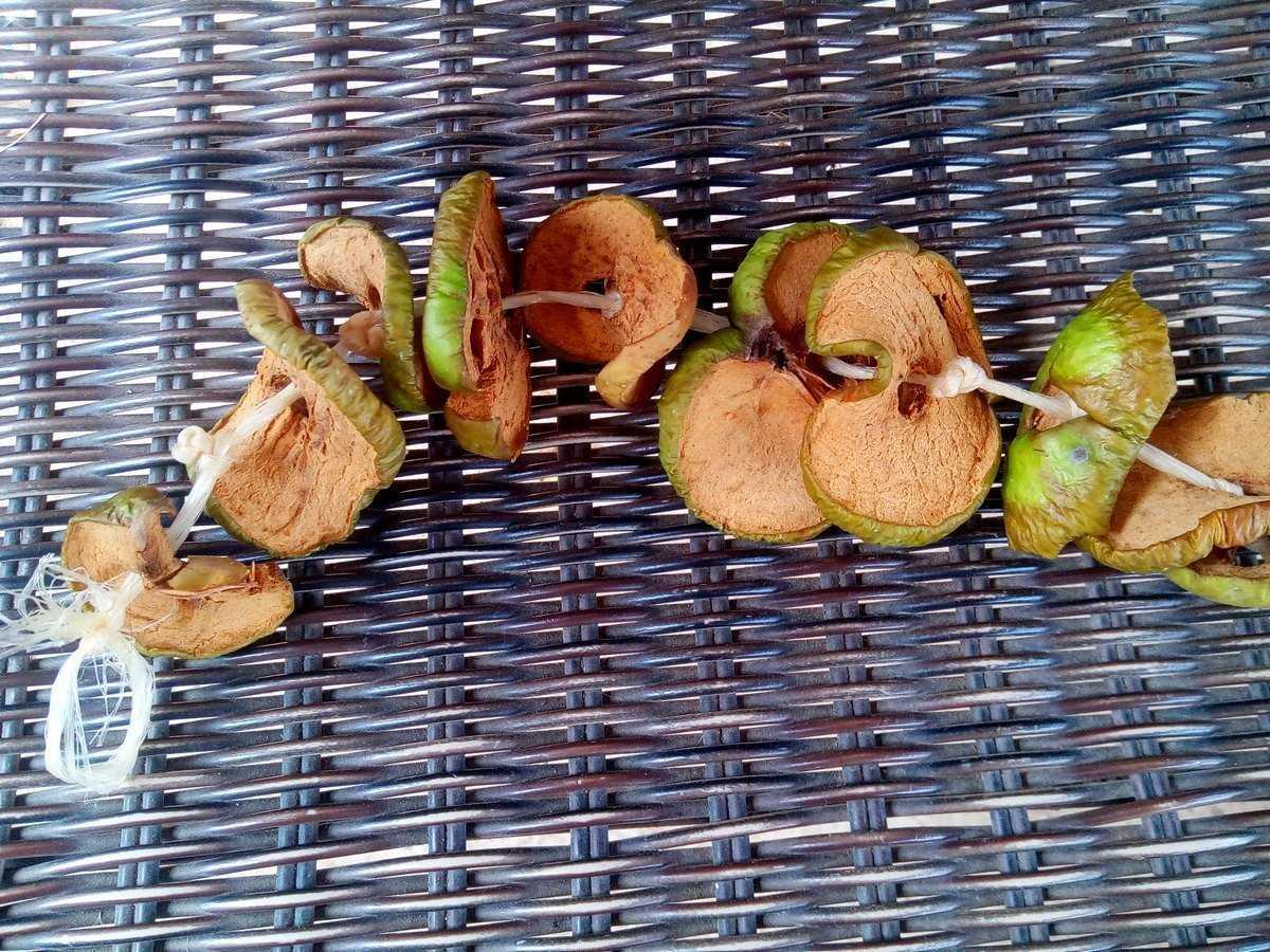 Можно ли засушить яблоки без духовки и сушилки