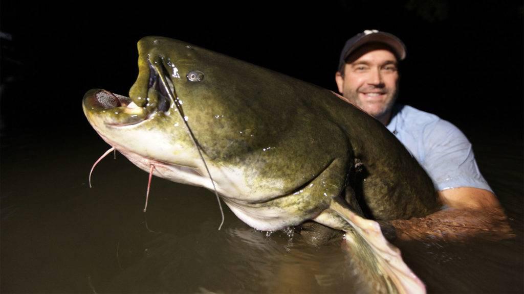 Рыба сом: польза и вред, как приготовить