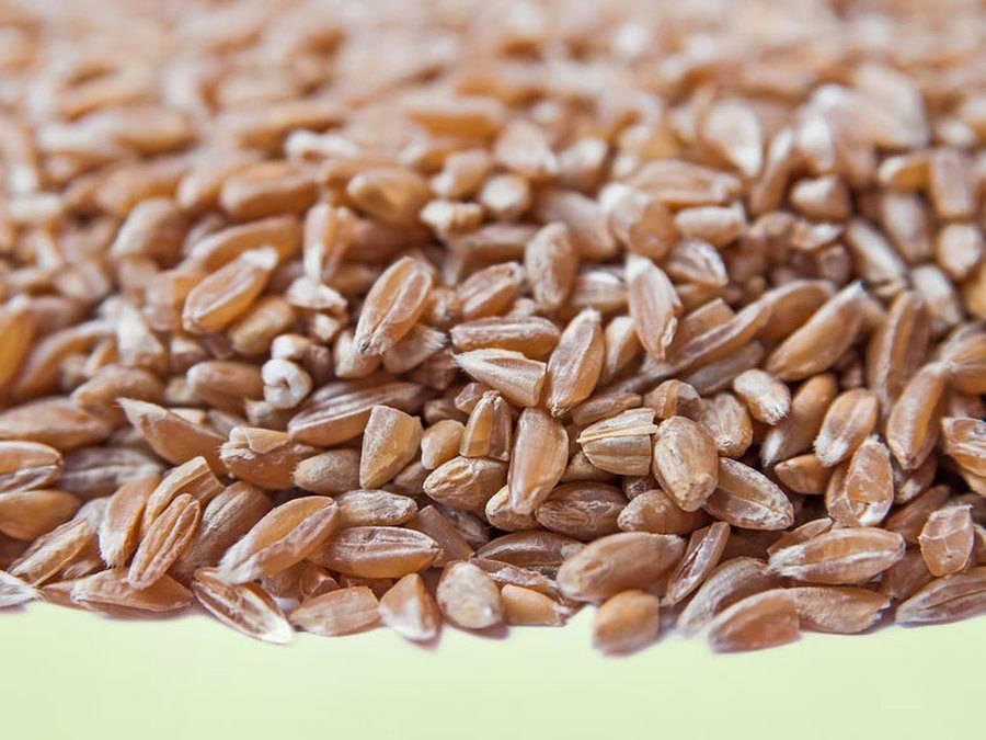 О пользе и вреде полбы для организма человека. отличие полбяного глютена от пшеничного