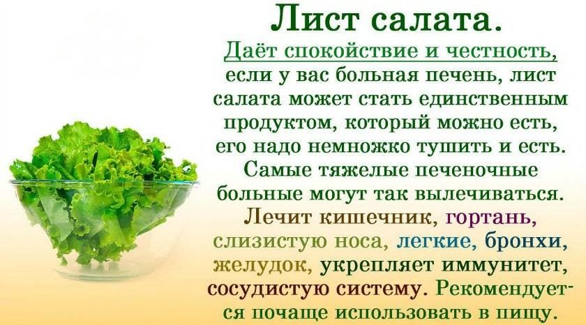 Польза салата, возможный вред для человека