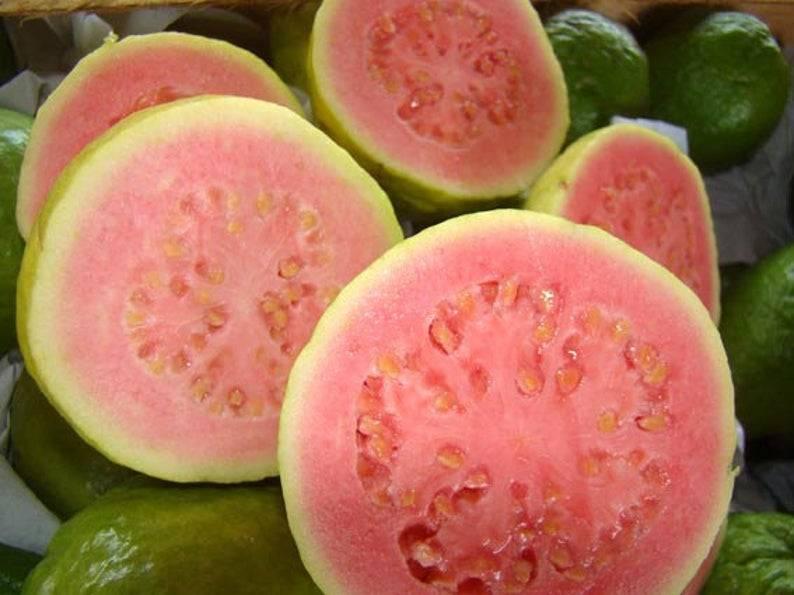 Гуава — полезные свойства и противопоказания, калорийность, состав. как правильно есть гуаву. выращивание в домашних условиях