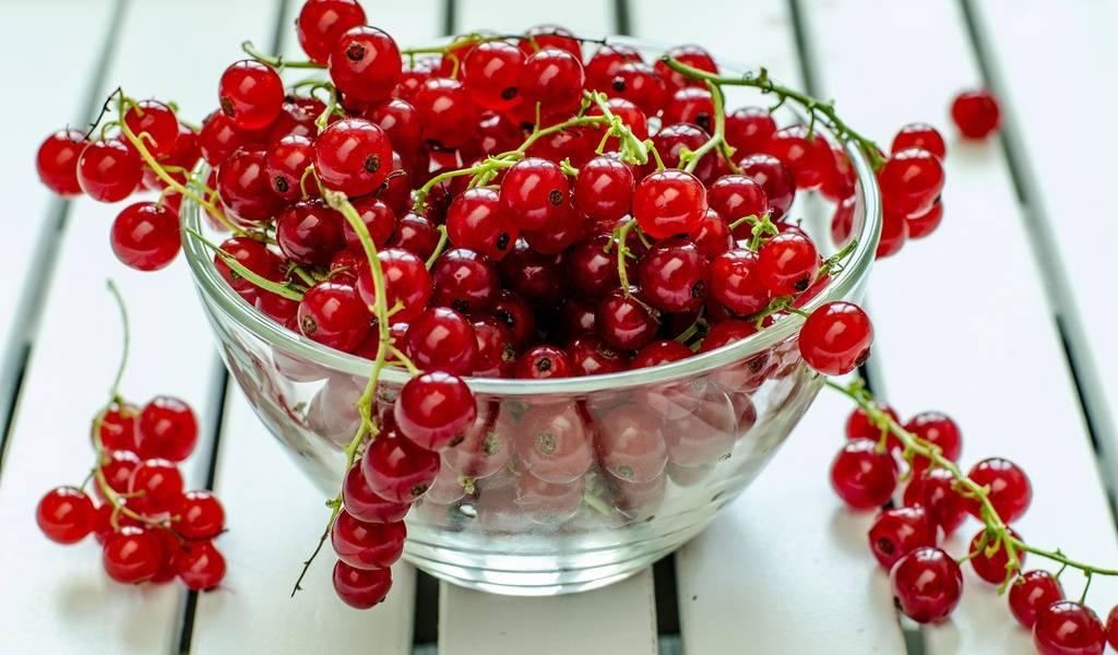 Красная смородина — польза и вред для здоровья