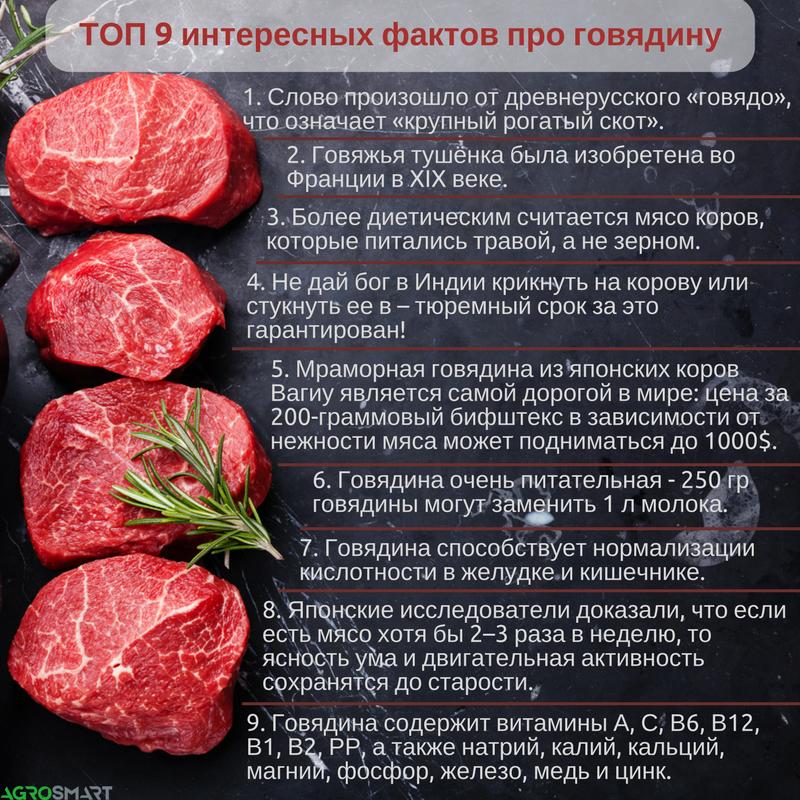 Польза и вред мяса для здоровья человека