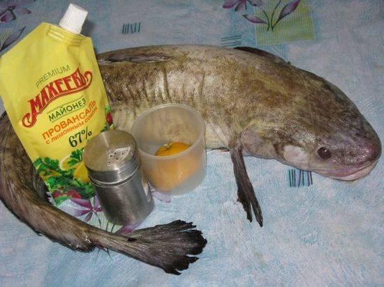 Полезные свойства и возможный вред рыбы налим
