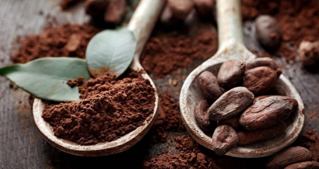 Любимый всеми какао-порошок: расскажем все о его пользе и вреде для здоровья