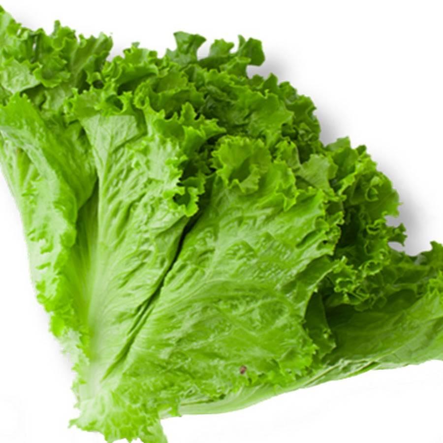 Кресс-салат: польза и вред для здоровья