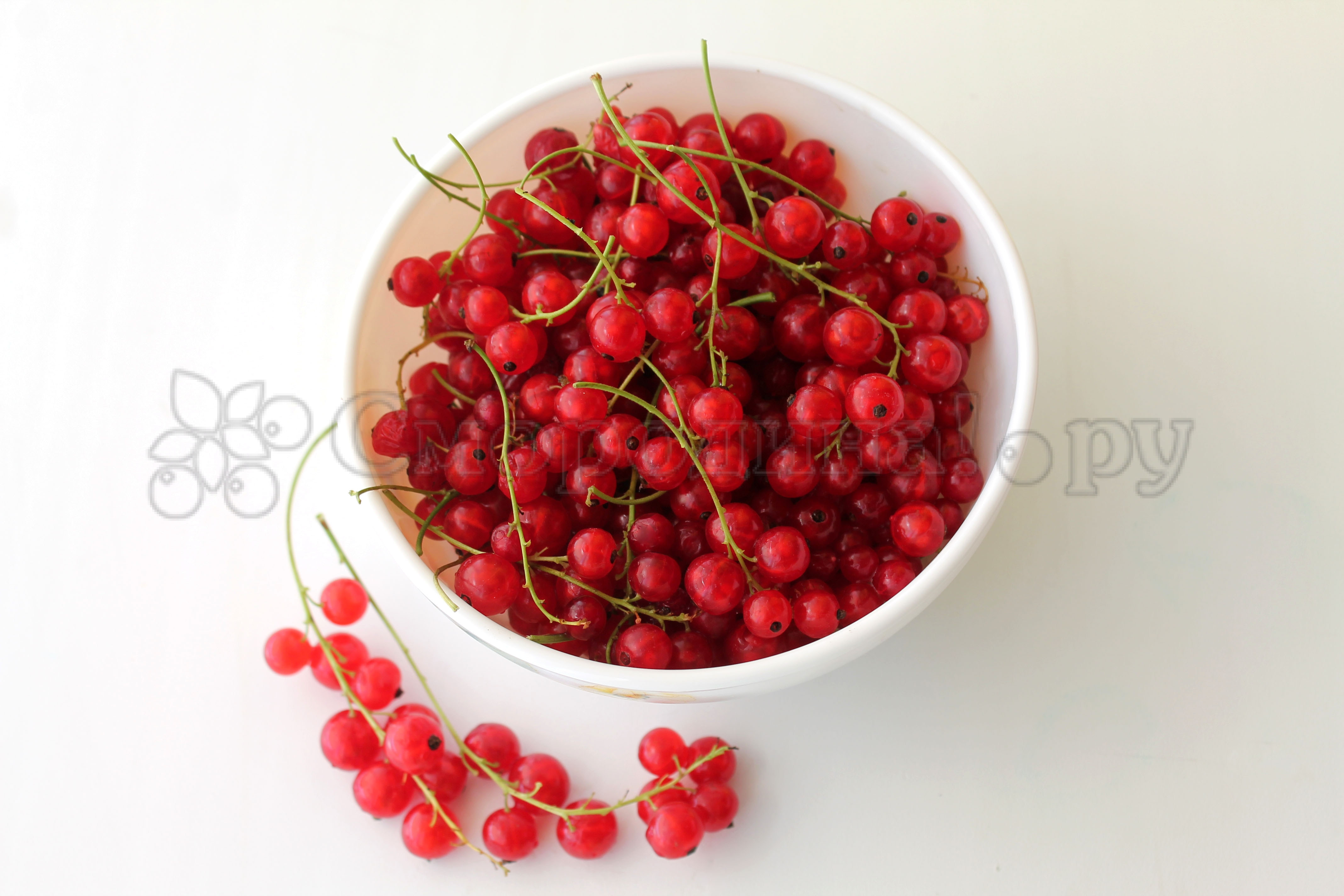 В чем состоит польза и вред красной смородины для здоровья? химический состав ягоды