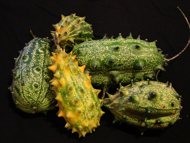 Особенности выращивания кивано в домашних условиях