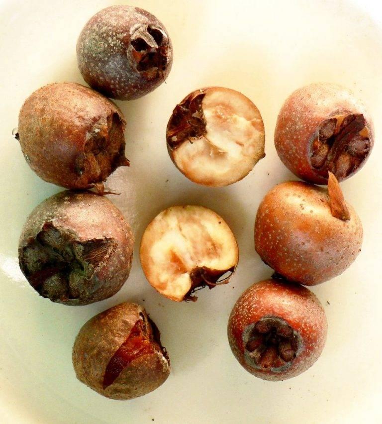 Мушмула японская — описание, польза и вред, состав, калорийность, рецепты. как вырастить мушмулу дома?