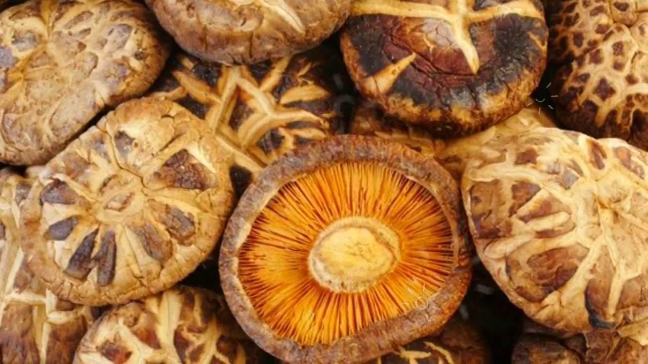 Шиитаке — очень полезные грибы: свойства и борьба с раком