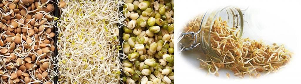 Пророщенная пшеница, польза и вред