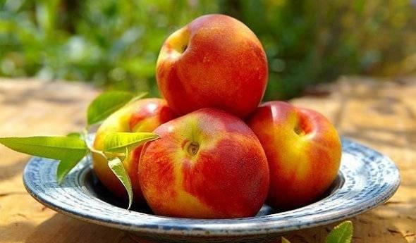 Нектарин: польза и вред. как похудеть с помощью нектарина?