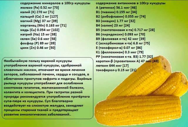 Польза и вред кукурузной каши для организма