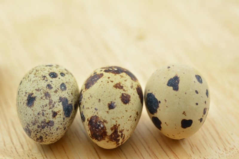 Как и сколько варить перепелиные яйца