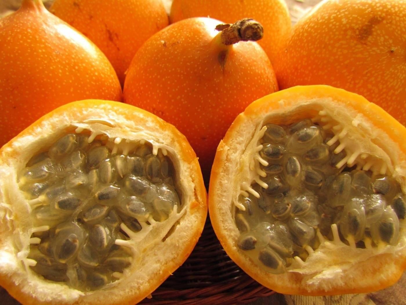 «золотой апельсин» кумкват: его польза для организма человека, возможный вред, нормы и области применения