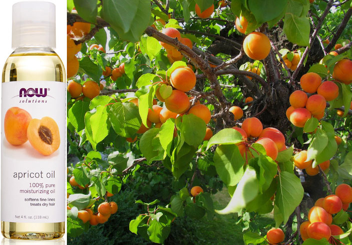 Полезные свойства абрикоса и состав витаминов