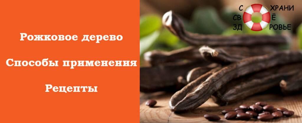 Кэроб — польза и вред для здоровья организма.