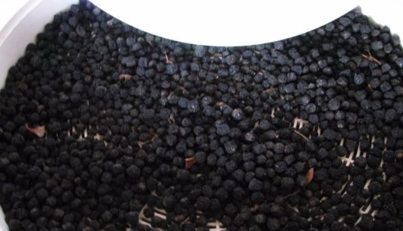 Как заваривать рябину черноплодную — советы фитодокторов