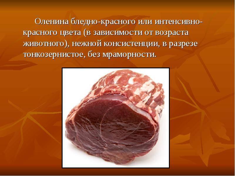 Витамины в мясе оленя