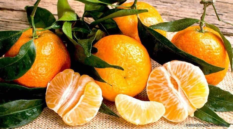 Благородные мандарины – польза для здоровья — рассказываем по пунктам