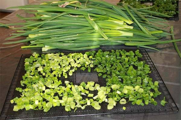 Как сохранить зеленый лук свежим