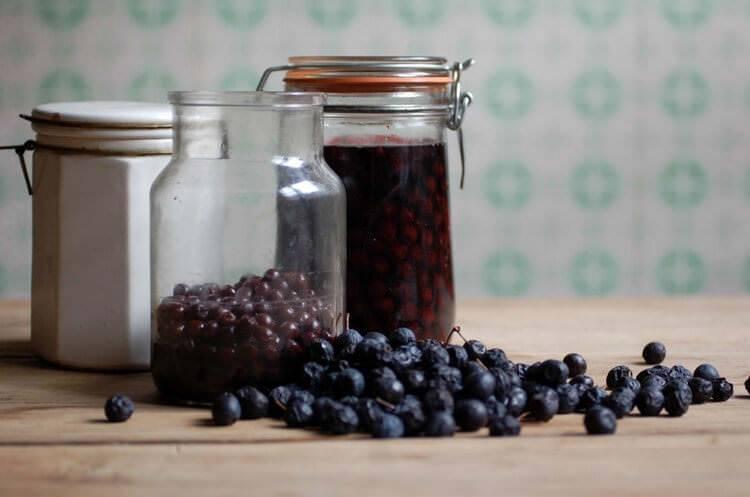 Полезные свойства терна в народной медицине, использование листьев, цветов, коры икорней