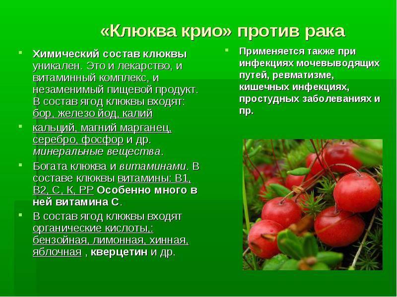 Полезные свойства клюквы для организма человека